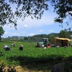 Mindestlohn in der Landwirtschaft